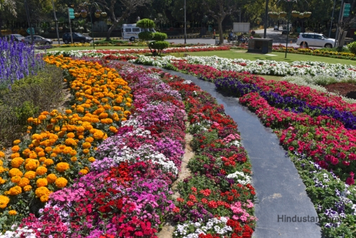 Flowers Bloom In Delhi