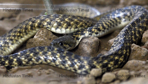 Newly Revamped Reptile House At National Zoological Park
