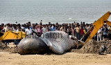 Thirty Five Foot Long Whale Washed Ashore In Mumbai
