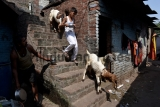 Indian Muslims Celebrate Of Bakri Eid/Eid al-Adha