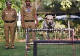 All-India Gold And Bronze Medallist Twins Of Delhi Police Dog Squad