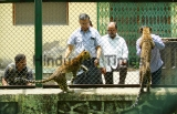 Two Rescued Leopard Cubs At Sanjay Gandhi National Park