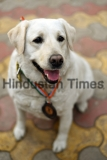 All-India Gold Medalist Of Delhi Police Dog Squad