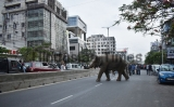 Wild Elephant Walks On Guwahati Street, Creates Panic