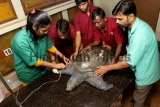 Turtle Rescued From Kachrali Lake In Thane